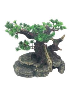 Large Bonsai with Plant *New*