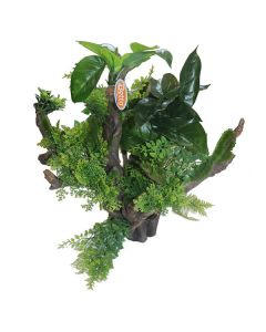 Large Root and Plants *New*
